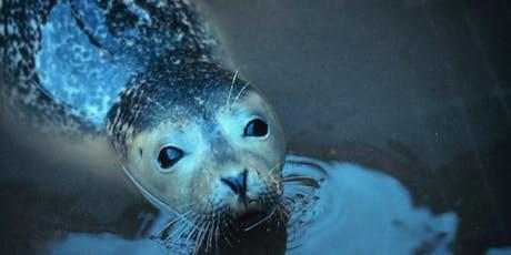Mammals at the Estuary: Mini Explorers (ages 3-5) tickets
