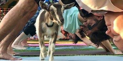 Goat Yoga Fundraiser For BajaBound