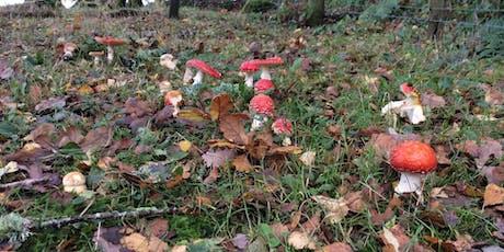 Fungus Foray at Langaford Farm tickets
