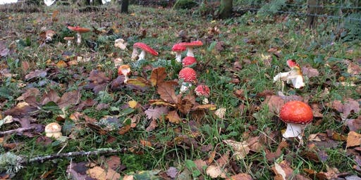 Fungus Foray at Langaford Farm