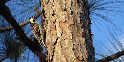 Hernando Audubon Talk about Red-cockaded Woodpecker Habitat