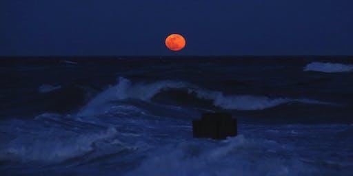 NYC Wild! Essentials: Full Moon: Queens: Fort Tilden Photography and Nature Walk