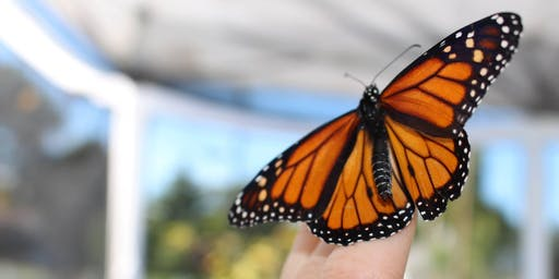 Monarch Butterfly Release Saturday 9/14 11:00 AM Session