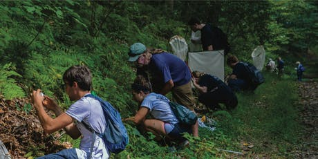 BioBlitz Guided Forest Ecology Walk tickets
