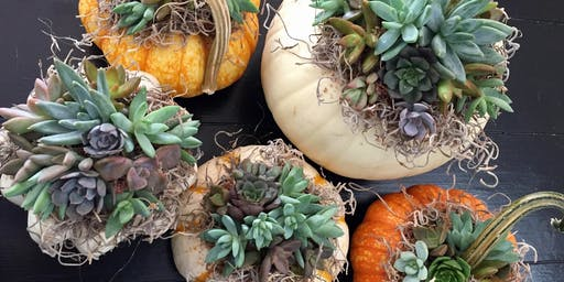 Lucky's Market Succulent Pumpkin Centerpiece Workshop