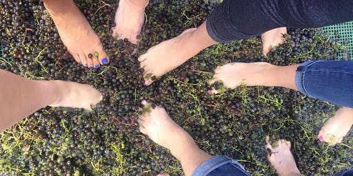 Grape and Spillage - Grape Stomp at Saxon Winery