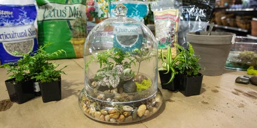 DIY Terrarium Workshop | Elk Grove