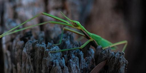 Backyard Bug Catchers