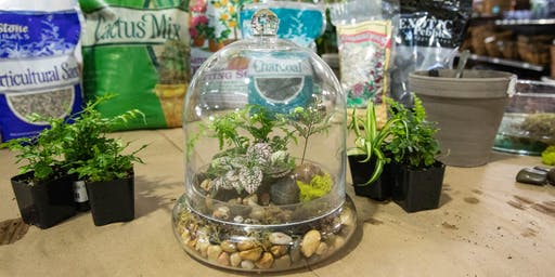 DIY Terrarium Workshop | Folsom