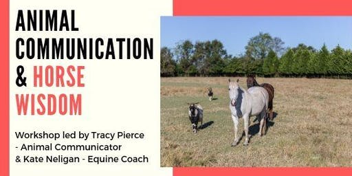 Animal Communication & Horse Wisdom Workshop