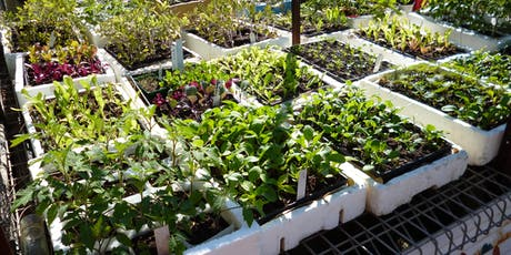 Plant Propagation Workshop. tickets