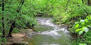 Sligo Creek Stream Cleanup 2019