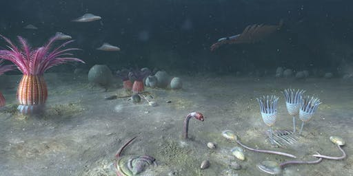 The Cambrian Explosion: The Evidence of Exceptionally Preserved Fossils