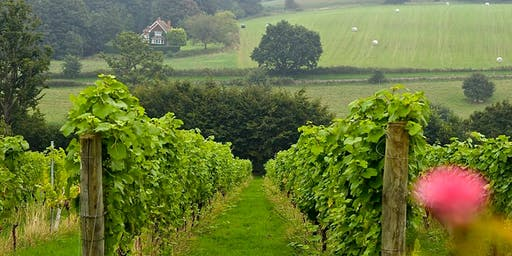 Visit a Vineyard