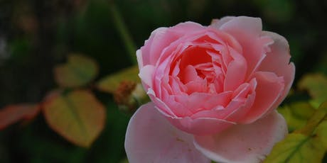 Foraging Workshop - Rose Cosmetics tickets