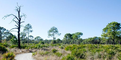 Slash Pine Planting at Boyd Hill Nature Preserve