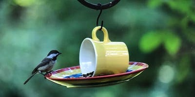 Cup and Saucer Bird Feeder at Wild Birds Unlimited