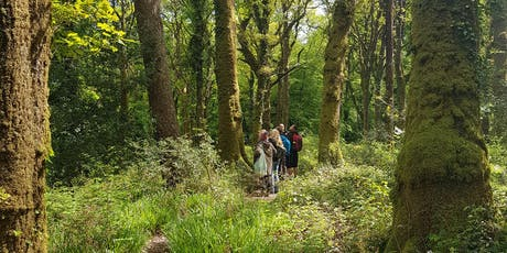 Experience Forest Bathing - Staffhurst Woods, West Kent tickets