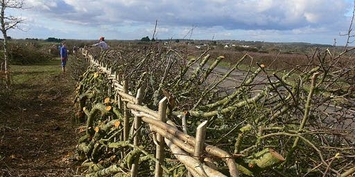 Hedge Laying (A Practical Training Session)