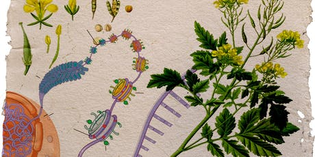 Feast, Famine, and Flowering Plants: Understanding Epigenetics through Mustard Plants  tickets