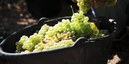 Harvest Moon Wine Tasting