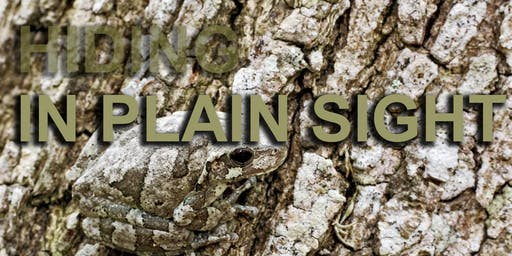 Hiding in Plain Sight - A Team Building Game