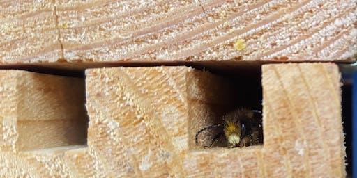 Pollinator Care Workshop