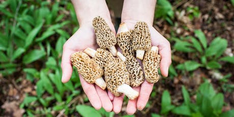 Wild Mushroom Foray - Sunday, September 1st  tickets