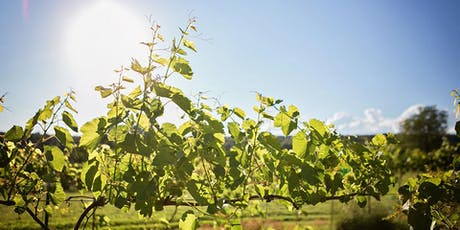 Dinner in the Vineyard (price includes gratuity) tickets