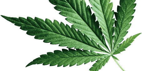 Medical Marijuana Cannabis Doctor - Get Approved