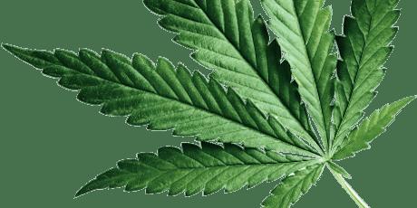 Savings Sunday - Medical Marijuana Cannabis Doctor tickets