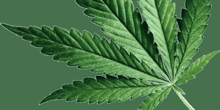 Savings Sunday - Medical Marijuana Cannabis Doctor