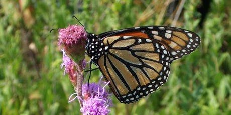 Monarch Butterfly Tagging tickets