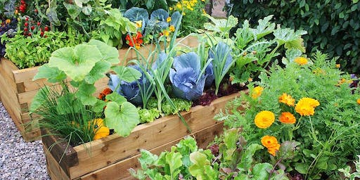 Attracting Bees and Beneficial Insects into the Garden