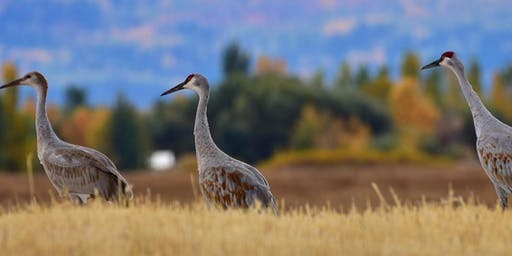 Morning Sandhill Crane Tours at 2019 Greater Yellowstone Crane Festival