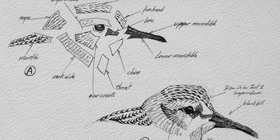 Sketching Masterclass Wildlife and Landscapes at RSPB Titchwell Marsh