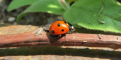 Drop-in Session - Ladybirds