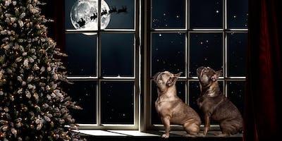 Pet Waiting for Santa Digital Art