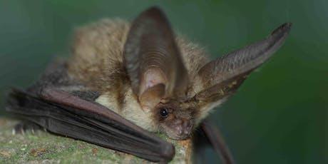 Bat Night at Castle Eden tickets