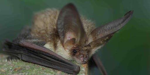 Bat Night at Castle Eden