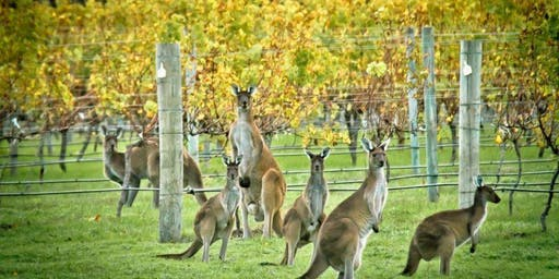 Reds Around Australia