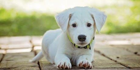 Masterclass Puppy Coaching: Instaples tickets