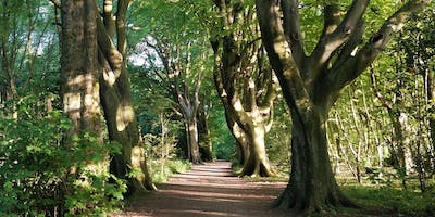 Wonder Walk and Talk in Stanmer Park with Creative Coach Julia Fry