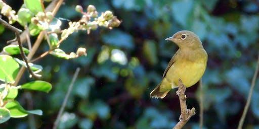NALT Nature Walk: Tree & Bird ID