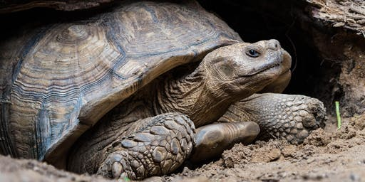 Gopher Tortoise Symposium | GFA Members Only Event