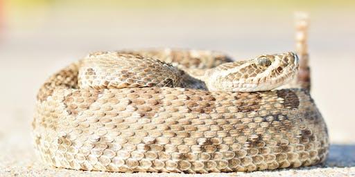 Venomous Snake Safety