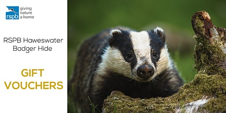Haweswater Badger Hide | Gift Vouchers tickets
