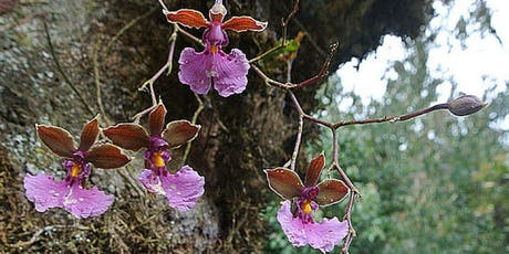Orchid Care with Jeff Baldwin of The Orchid Gallery tickets