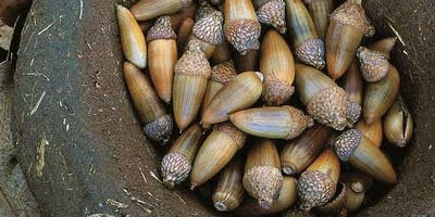 Ohlone in the Marsh: Acorn Grinding