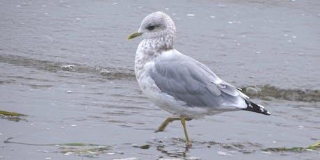 Coastal Monitoring Training Workshop - Bird Studies Canada tickets
